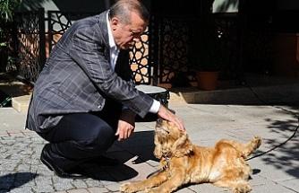 Cumhurbaşkanı Erdoğan hayvan hakları için talimat verdi